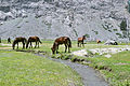 Wild and free horses.JPG