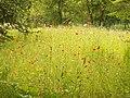 Wildblumen - panoramio.jpg
