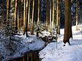Wilder Eisenbach beim Eisenbachsee.jpg