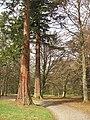 Woodland, Dawyck Botanic Gardens (geograph 1822204).jpg