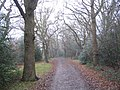 Woodland North of Chingford Plain - geograph.org.uk - 102470.jpg