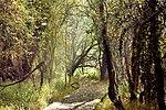 Woodland walk - RSPB Fowlmere - Explored -) (22675117175).jpg