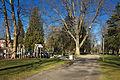 Wright Park in Tacoma.jpg