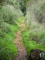 Yagur – Nesher, the Green Path – Mount Carmel 004.JPG