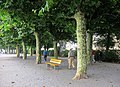 Yellow Bench in Rorschach by Lake Constance - panoramio.jpg