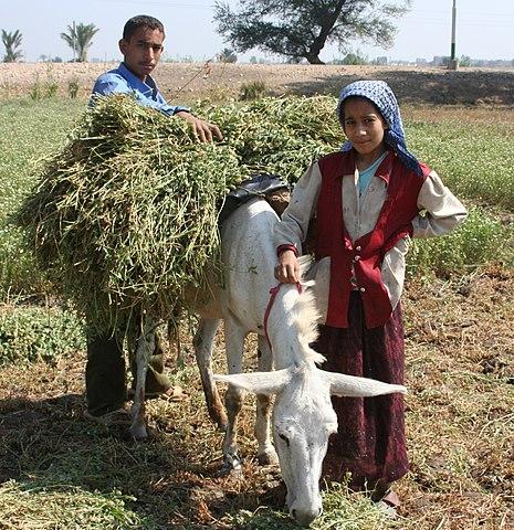 Cache Http Farming Mods Fr Cat C Agorie Tracteurs