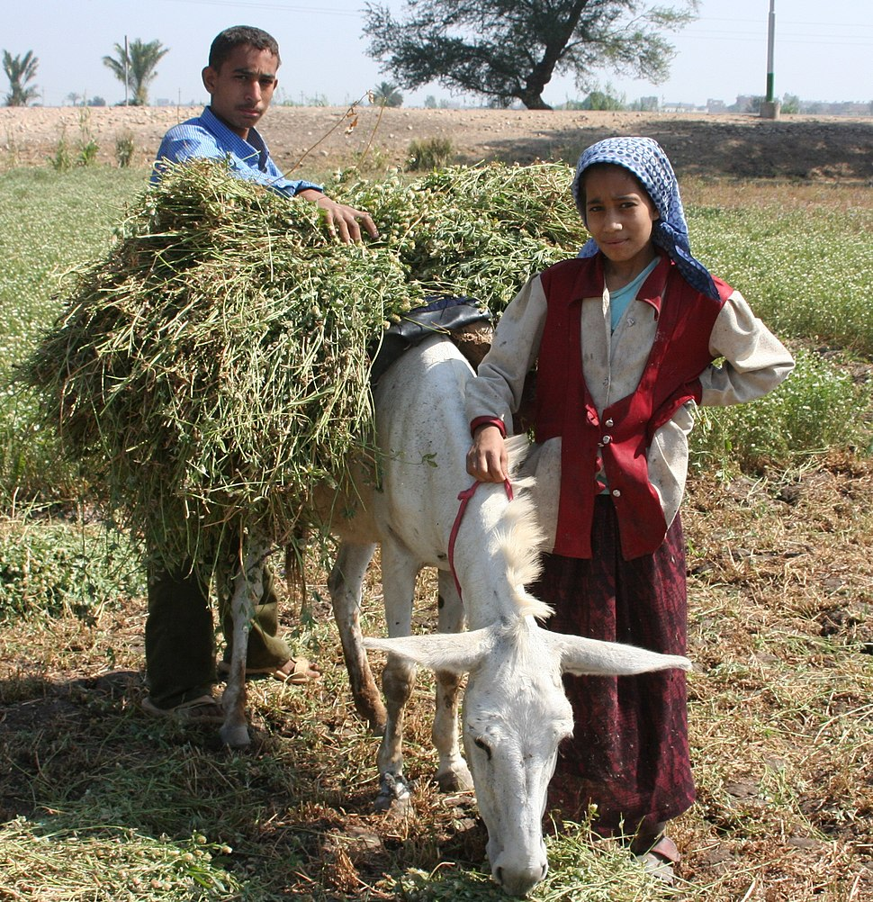 Young boy and girl harvest farm crops in Egypt