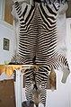 Zebra fur skin (1).jpg