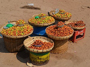 Ziziphus mauritiana - Ripe and unripe jujube fruits for sale at the Luangwa Bridge in Zambia.