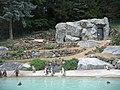 Zoo-neuwied-pinguinanlage.jpg