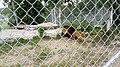 Zoo de Falardeau 42.jpg