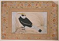 """Great Hornbill"", Folio from the Shah Jahan Album MET sf55-121-10-14a.jpg"