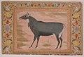 """Study of a Nilgai (Blue Bull)"", Folio from the Shah Jahan Album MET sf55-121-10-13a.jpg"