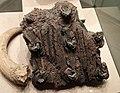 «Перунів дуб» - священе дерево дохристиянського часу, зберігається в Музеї Історії Києва.jpg