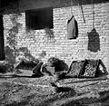 Čebula na lesah, Gradež 1948.jpg