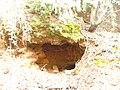 Ρέμα κοκκιναρά 8 - panoramio.jpg