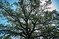 Андріївський ліс 10.jpg