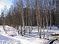 Весенний пикник на снегу - panoramio.jpg