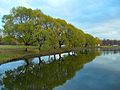 Деревья на берегу пруда.JPG