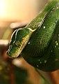 Зелёный змей.JPG