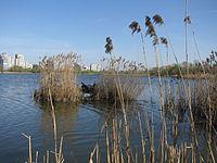 Кирилівське озеро.JPG