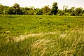 Коваль на фоне деревьев в Ботаническом саду ЮФУ г. Ростов-на-Дону.jpg