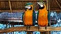 Красночные Попугаи ) тоже зоопарк Анапы. - panoramio.jpg