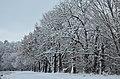 Національний природний парк Голосіївський. Фото 3.jpg