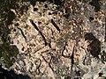 Немецка свастика на горе Хара-Хора - panoramio.jpg