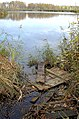 Озеро - panoramio - Дмитрий Мозжухин.jpg
