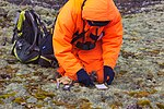 Орнитолог с птенцом поморника IMG 4720.JPG