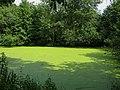 Очень зелёный пруд - panoramio.jpg