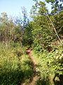 """Парк шума """"Гази Баба"""" 21.jpg"""