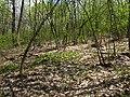 Первая зелень на склонах Святых гор.jpg