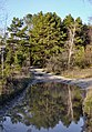 Рання весна у Гідропарку 2.jpg