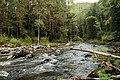 Река Богунай, осень, Евгений Сафонов, 3.jpg