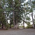 Река Жаксы Каргалы, Каргалинский район Актюбинской области Казахстана - panoramio.jpg