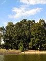 Рыльский район Марьино Парк Дуб 600 лет 3.jpg