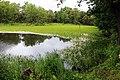 Самае нізкае месца ў Брэсцкім раёне — возера Бяздоннае - panoramio.jpg