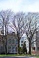 Червоний бук у Хмельницькому по вулиці Гагаріна, 5.jpg