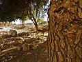 מאחורי העץ.jpg