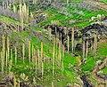 باغهای روستای هرگلان - panoramio.jpg