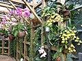 南山植物园-吊兰 - panoramio.jpg