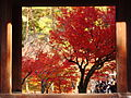 南禅寺の紅葉.jpg