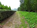 台大山地實驗農場 National Taiwan University Highland Experimental Farm - panoramio.jpg