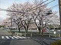 大野台4丁目交差点 - panoramio.jpg