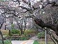 小石川後楽園ー1.JPG