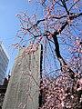春だね~ - panoramio.jpg