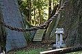 杉の大杉 - panoramio.jpg