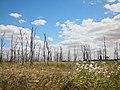 生与死 - Life and Death - 2012.09 - panoramio.jpg